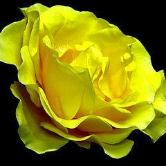 """photo """"Yellow beauty"""""""
