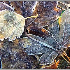 """фото """"Frost and Sunshine"""""""