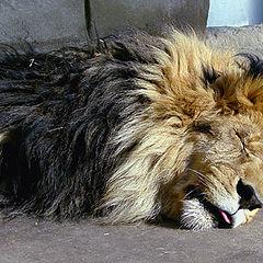 "photo ""Don`t wake up a sleeping cat"""