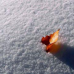 "photo ""Autumn flame"""