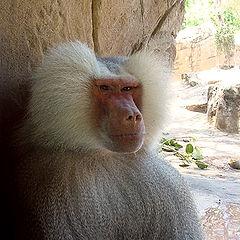 """photo """"Monkey #1"""""""