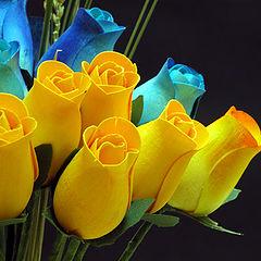 """photo """"Wood rose"""""""