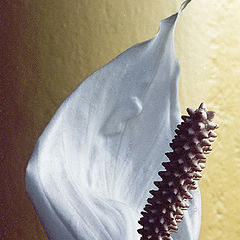 "фото ""Flower 5"""