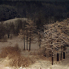 """фото """"Лес перед Рождеством"""""""