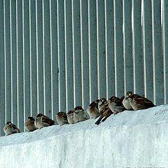 "фото ""Bird Parliament"""