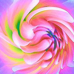 "фото ""Spiral Dahlia"""