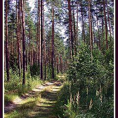 """photo """"Wood road"""""""