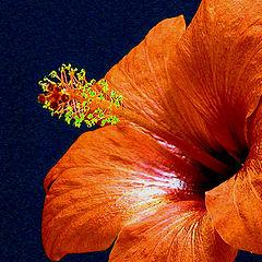 """photo """"Oranje dream"""""""