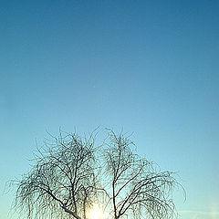 "фото ""про дерево"""