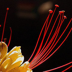 "фото ""Simply a flower..."""