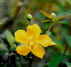 "фото ""Flower 6"""