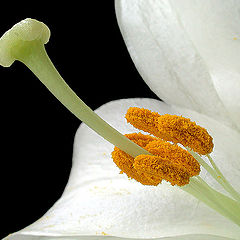 """фото """"Close to it for touching..."""""""