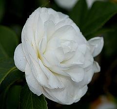 "фото ""Flower 7"""