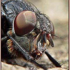 "photo ""Fly Face"""