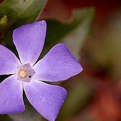"""фото """"My Flower nє 10"""""""