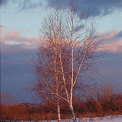"фото ""A Warm Glow on Cold Ground"""