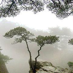 "photo ""Twin Pines"""