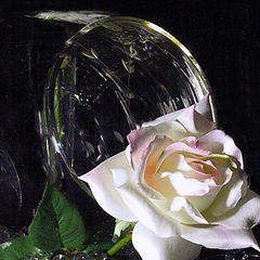 "фото ""Roses and Glass 02"""