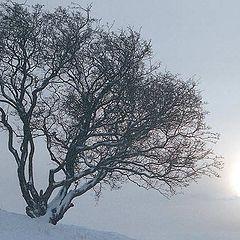 "photo ""Winter"""