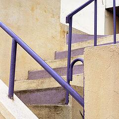 "фото ""Yellow & violet"""