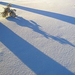 """photo """"Winter wood competitions of shadows"""""""