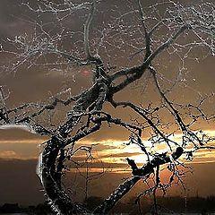 """photo """"dead tree in winter"""""""