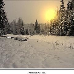 "photo ""Winter etude"""