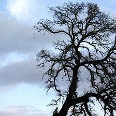 """фото """"Between Storms"""""""