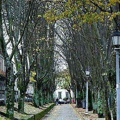 "фото ""Walking into trees"""