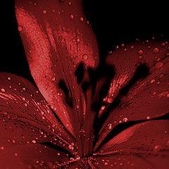 """photo """"flor#2"""""""