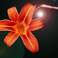 """photo """"Fleur"""""""