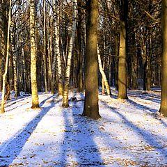 "photo ""Winter Evening Shadows"""