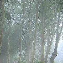 "photo ""Morning Walk"""