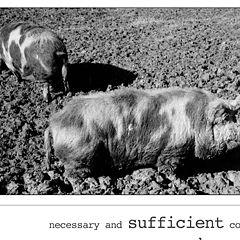 "photo ""sufficient condition"""