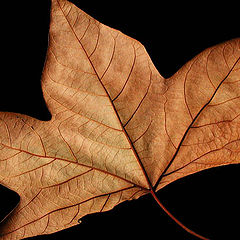 "photo ""Leaf"""