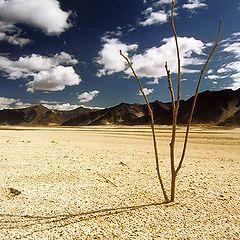 """фото """"В горах Тибета #7"""""""