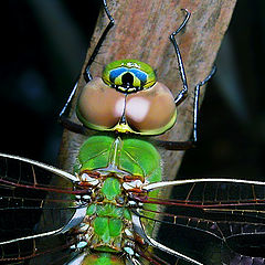 "фото ""Dragonfly Closeup"""