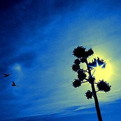 "фото ""Togheter we Fly"""