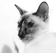 """photo """"Portrait of a pet"""""""