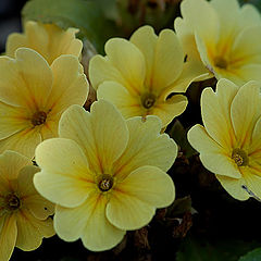 "фото ""Yellow Flowers II"""