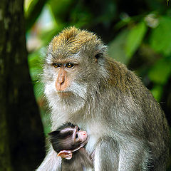 """photo """"Monkey"""""""