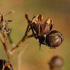 """фото """"Autumn #1"""""""