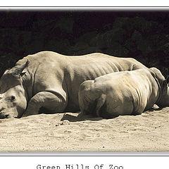 "photo ""Green Hills Of Zoo"""