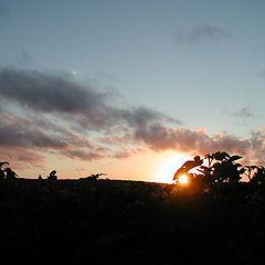 "фото ""* The sun go to dream *"""