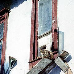 """фото """"Кошкин дом -2"""""""