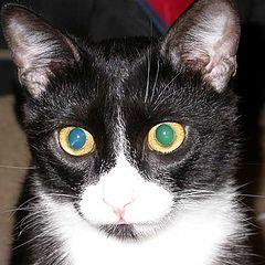 """фото """"The Cat"""""""