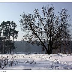 """фото """"Туманное утро-2"""""""
