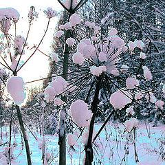 """фото """"Цветы уходящей зимы"""""""