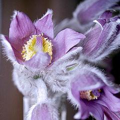 "фото ""The Five - (violet, yellow, & light grey flowers)"""
