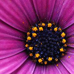 "фото ""Flower 13"""